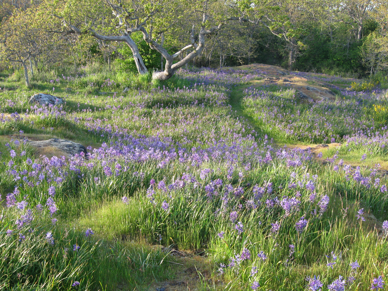 Meadow View Drive Smithfield Rhode Island