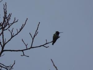 Bird walk Feb 16-2014 P1050673