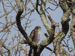 Bird walk Feb 16-2014 P1050691