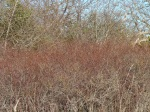 Spring Uplands Park March 21-2014