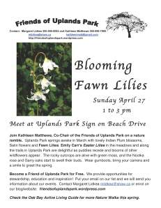 2014 Blooming Fawn Lilies posterREV